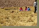 http://daveanddoreen.com/Peru/dscn3288.JPG